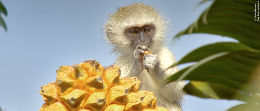 Natur- und Wildlife-Dokumentationen jetzt neu auf Sky Ticket