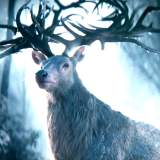 Shadow and Bone Trailer und Filminfos