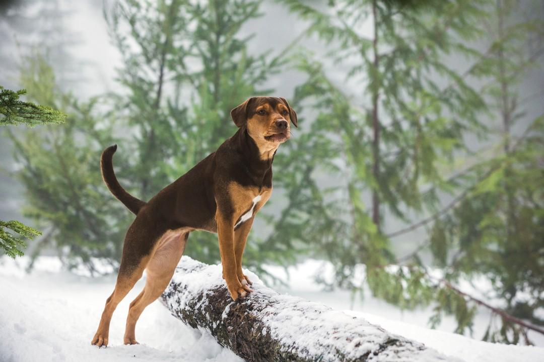 Die Unglaublichen Abenteuer Von Bella - Bild 4 von 4
