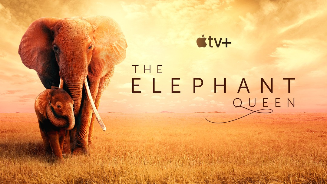 The Elephant Queen Trailer - Bild 1 von 2